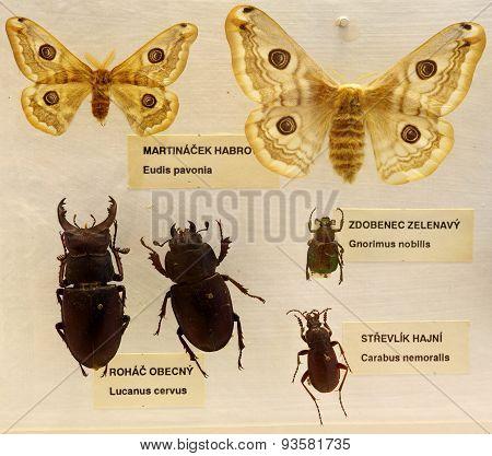 Entomology set