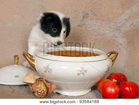 Hungry little border collie puppy in front of a soup tureen