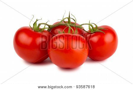 Red Ripe Tomatoes With Green Branch