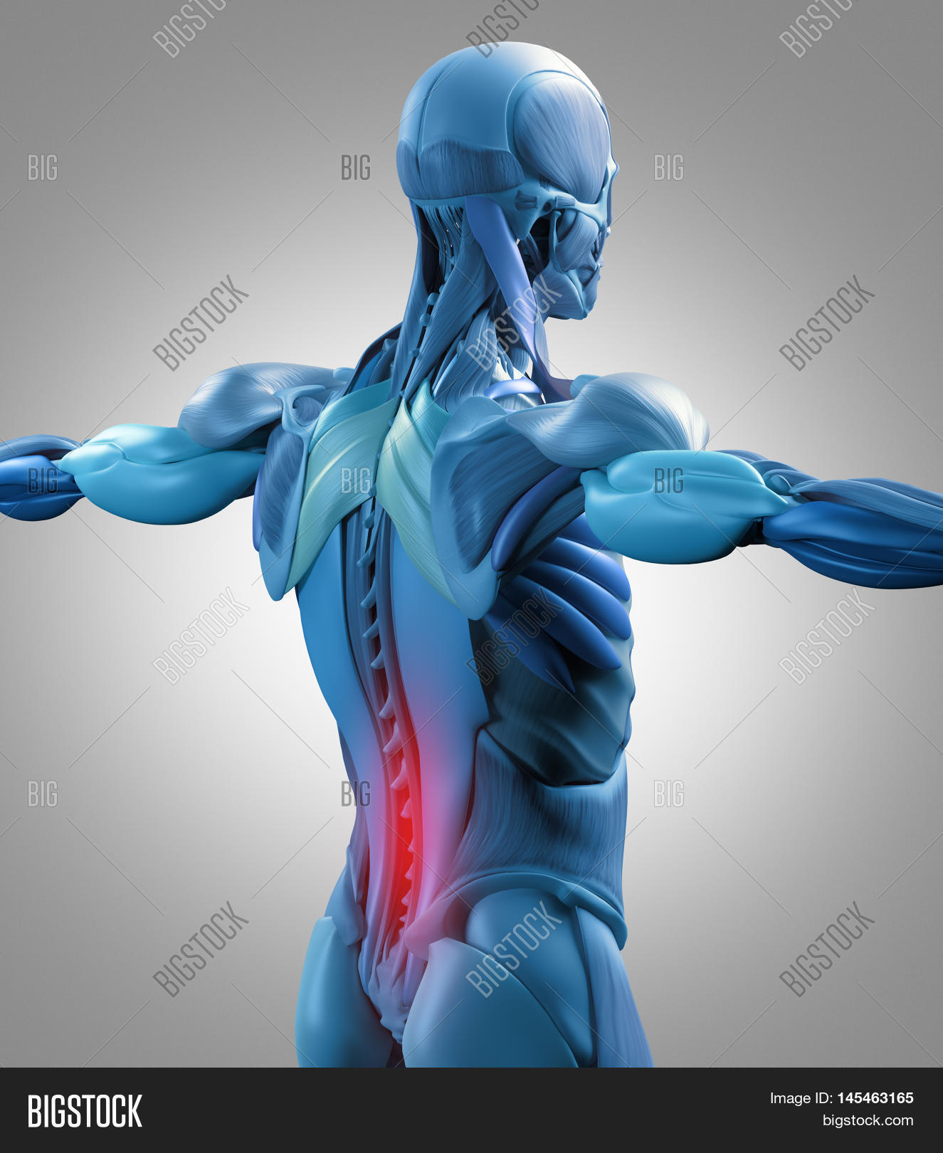 Human Anatomy Muscle Image Photo Free Trial Bigstock