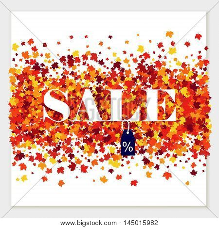 Vector sale pattern of scattered maple leaves in autumn colors. Isolated.