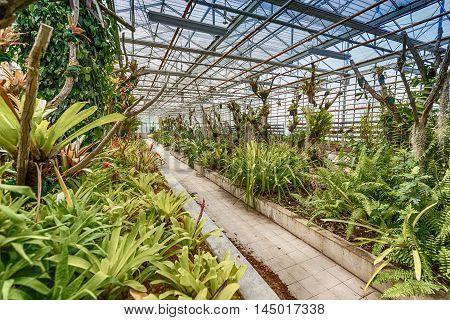 Interior botanic glasshouse building greenhouse complex, indoor