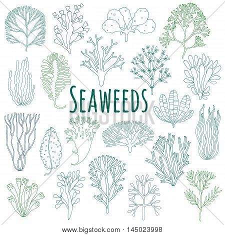 Hand drawn seaweed, coral set isolated on white background. Color sea plant icons. Vector illustration
