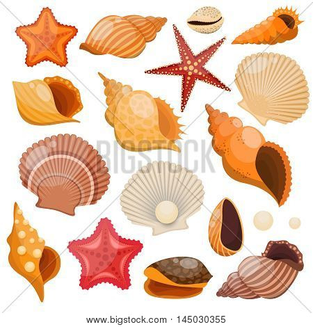 Shells and sea stars isolated colored icon set with from the seabed and patterns on shell vector illustration