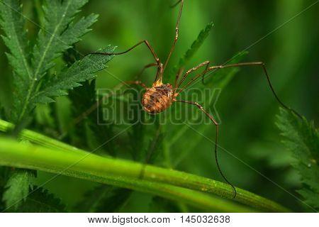 a spider crawling around in green grass