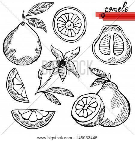 Pomelo Fruits Set