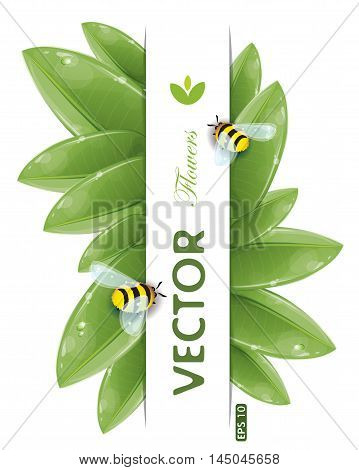 Green leaves design with flying bees isolated on white, vector illustration, eps-10