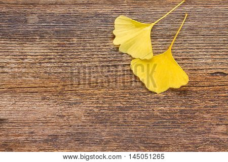 Yellow leaves of ginkgo biloba on wooden background