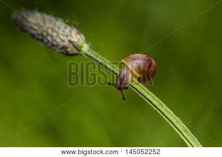 Snail Animal Meadow Summer Field Wildlife Impression
