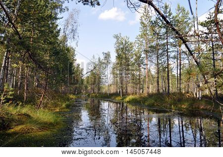 beauty forest landscape with river trees or sky