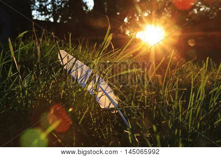 white feather of green at sunset, write a letter feather, a symbol of purity, creativity