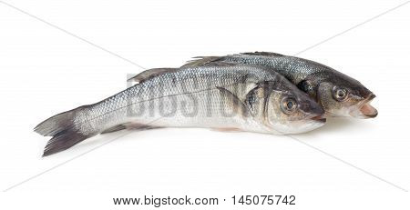 Two Sea bass isolated on white background