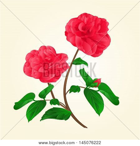 Camellia Japonica flowers with bud vintage vektor illustration