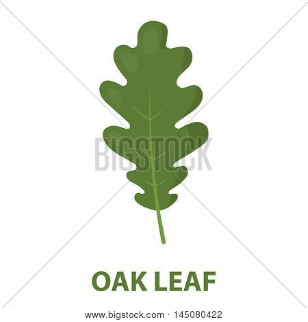 Oak Leaf vector illustration icon in cartoon design