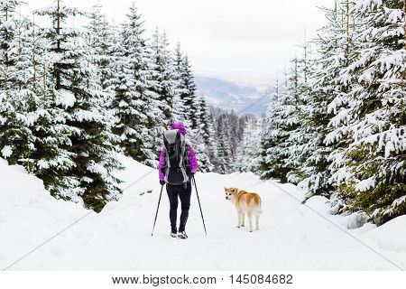 Female backpacker traveling hiking in white winter woods with akita dog. Legs and boots trekking. Recreation fitness and healthy lifestyle outdoors in nature. Motivation and inspirational winter landscape.