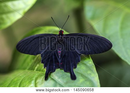 Tropical Butterfly Insect Nymphalidae Wildlife Exotic Impression