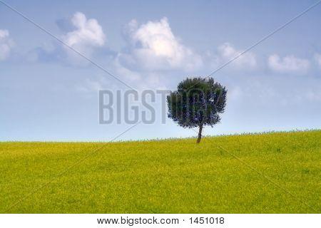 The Sicilian Landscape