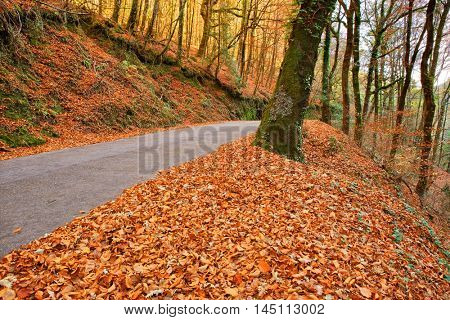 Autumn landscape with road and beautiful colored trees, in Geres, portuguese national Park