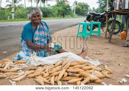 Madurai India - October 19 2013: Along a country road an older sitting woman plucks the cotton out of the shells the product of the cotton tree. She stuffs the wool into a white bag.