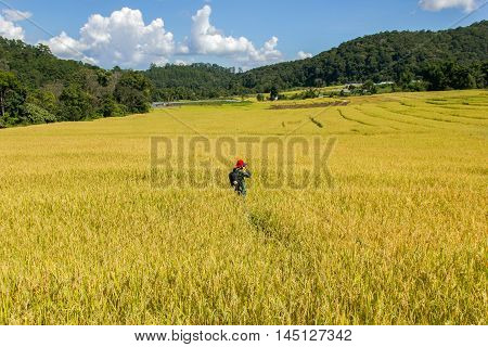 Asian men red hat take a photo green terraced rice field in Mae Klang Luang Mae Chaem Chiang Mai Thailand
