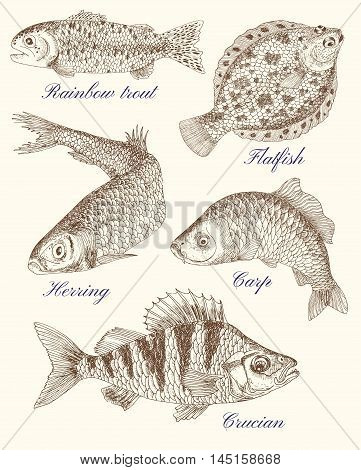 Design set with variation of freshwater and saltwater fish, hand drawn illustration
