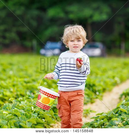 Happy little toddler kid boy picking and eating strawberries on organic pick a berry farm in summer, on warm sunny day. Harvest fields. Healthy food for children. Gardening and farming concept