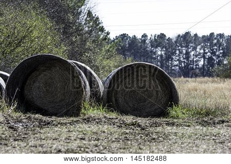 Improperly stored round hay bales on the side of a field in winter