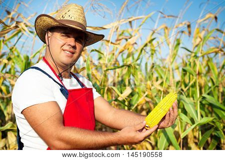 Farmer showing corn maize ear at field