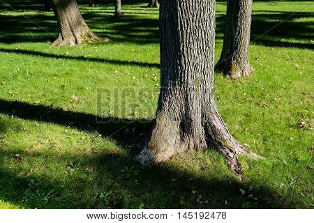 Shadows Of Tree Branches In Park With Trees
