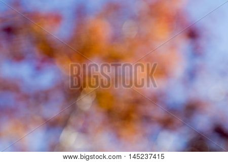 Autumn abstract colors. Background abstract, autumn colors, photos.Horizontally.