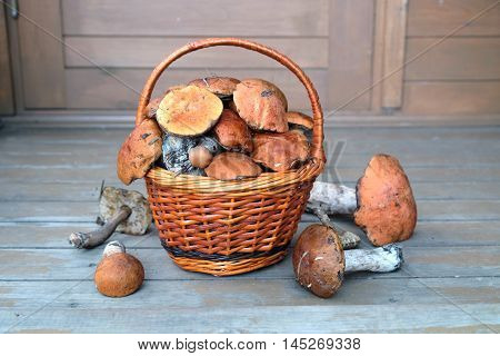 Still life with crop of many edible mushrooms in brown wicker basket on wooden house porch front view outdoors house porch
