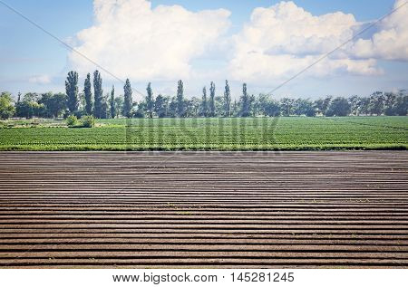 Furrows on field