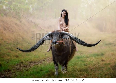 beautiful Asian girl riding long horn buffalo beautiful asian girl smiles when riding buffalo