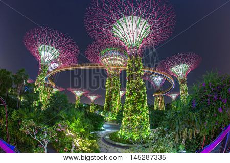 Night view of The Super Tree Grove at Gardens by the Bay in Singapore. Spanning 101 hectares and five-minute walk from Bayfront MRT Station.