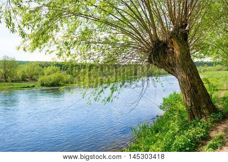 Big Old Tree On The River Bank