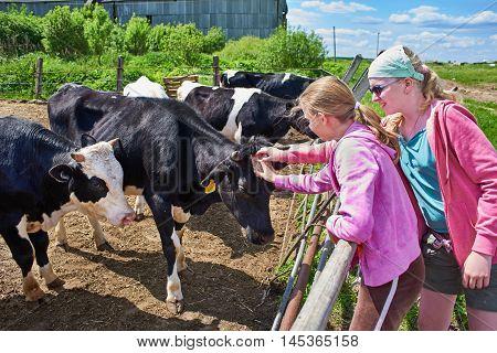 Girls stroking a cows on a dairy farm