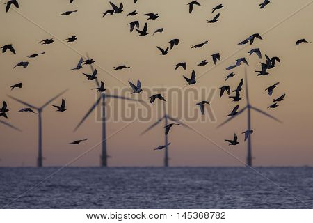 Silhouette of doves flying in front of the soft image of a wind farm at sunrise. The image symbolises a hope for peace and a green Earth. Save the planet!