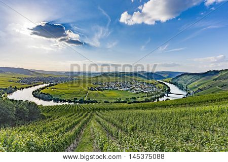 famous Moselle Sinuosity in Trittenheim Germany under blue sky
