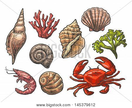 Set sea shell coral crab and shrimp. Vector color engraving vintage illustrations. Isolated on white background.