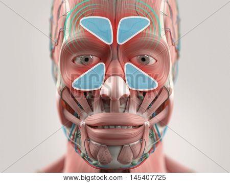 Anatomy model showing sinus infection. 3D illustration