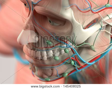 Human anatomy detail close-up of face,cheek bone. Bone structure,muscle. On plain studio background. Augmented reality. 3d illustration.