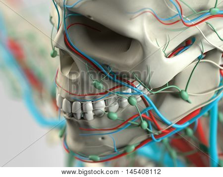Human anatomy detail of face,cheek bone. Bone structure. On plain studio background. Augmented reality. 3d illustration