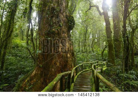 deep jungle of Thailand with wooden bridge