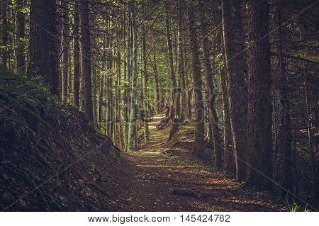 Hike Path In The Woods