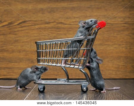Grocery supermarket trolley and three mouse. Concept - pet products supermarket or online. Rat race