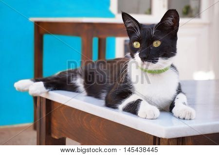 Black and White Lazy Cat Lying on the Table of a Tavern in the Greek Islands