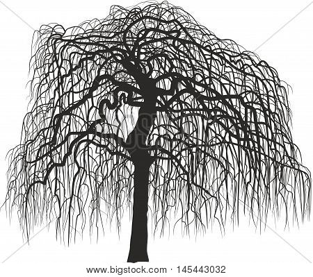Vector illustration silhouette Mulberry tree without leaves