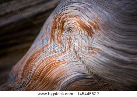 Bristlecone Pine Background