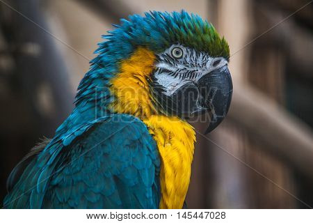 Parrot Bird Wildlife Tropical Colorful Exotic Impression