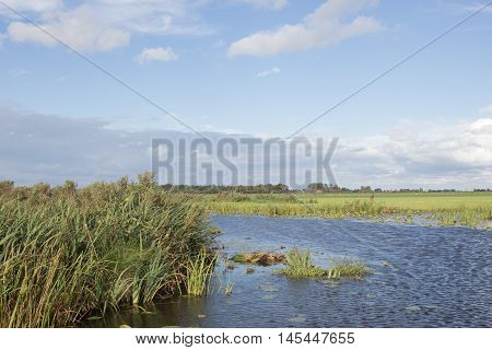 Typical polder landscape with canals and reeds in The Netherlands